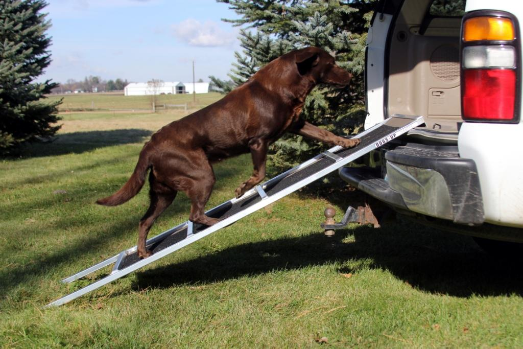 Training Your Dog to use the Dogs-Up Ramp