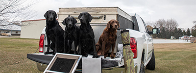 Dogs sitting on the back of a truck
